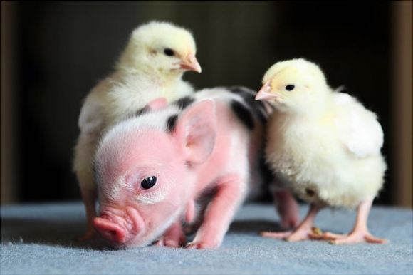 Baby-Animals-008