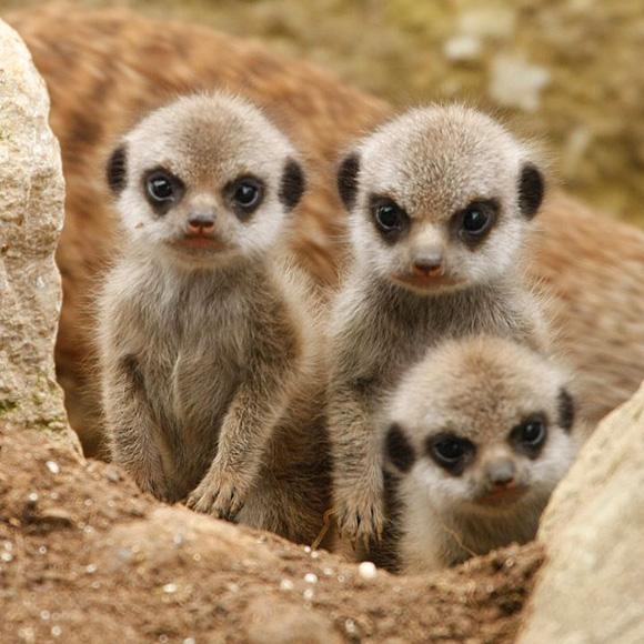 Baby-Animals-033