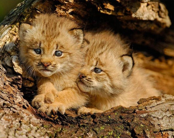 Baby-Animals-047