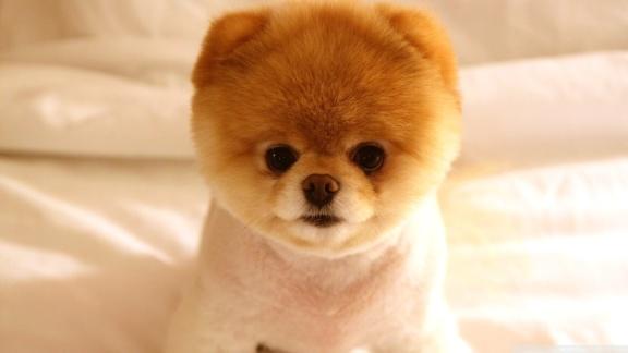 cute-dog-692077