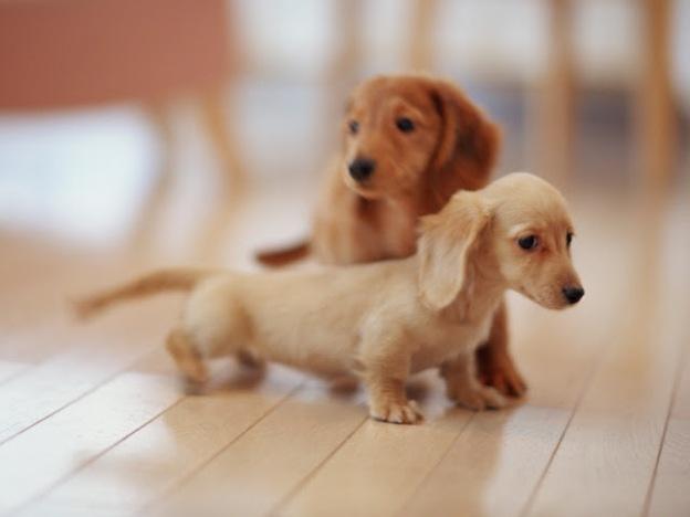 fotos-de-cachorros