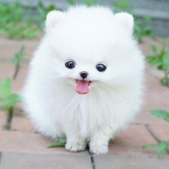 omg-adorable-animal-babies-Favim.com-671645