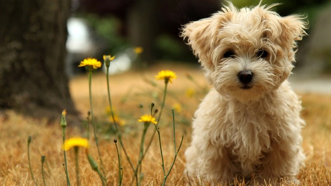 tumblr_static_wallpaper-cute-little-dog-1920x1080