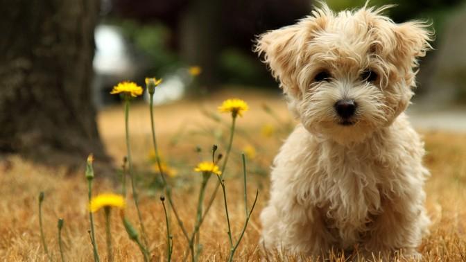 tumblr_static_wallpaper-cute-little-dog-1920x1080