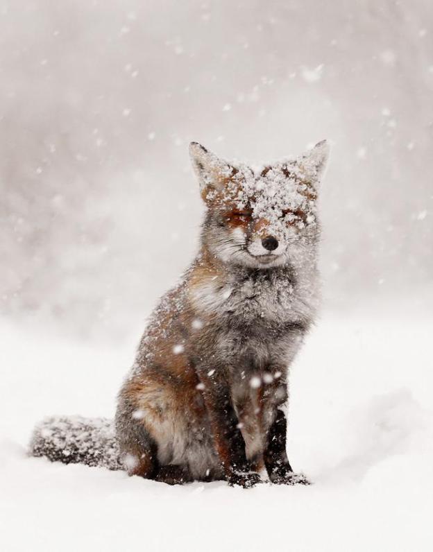 Animals-hate-snow-3