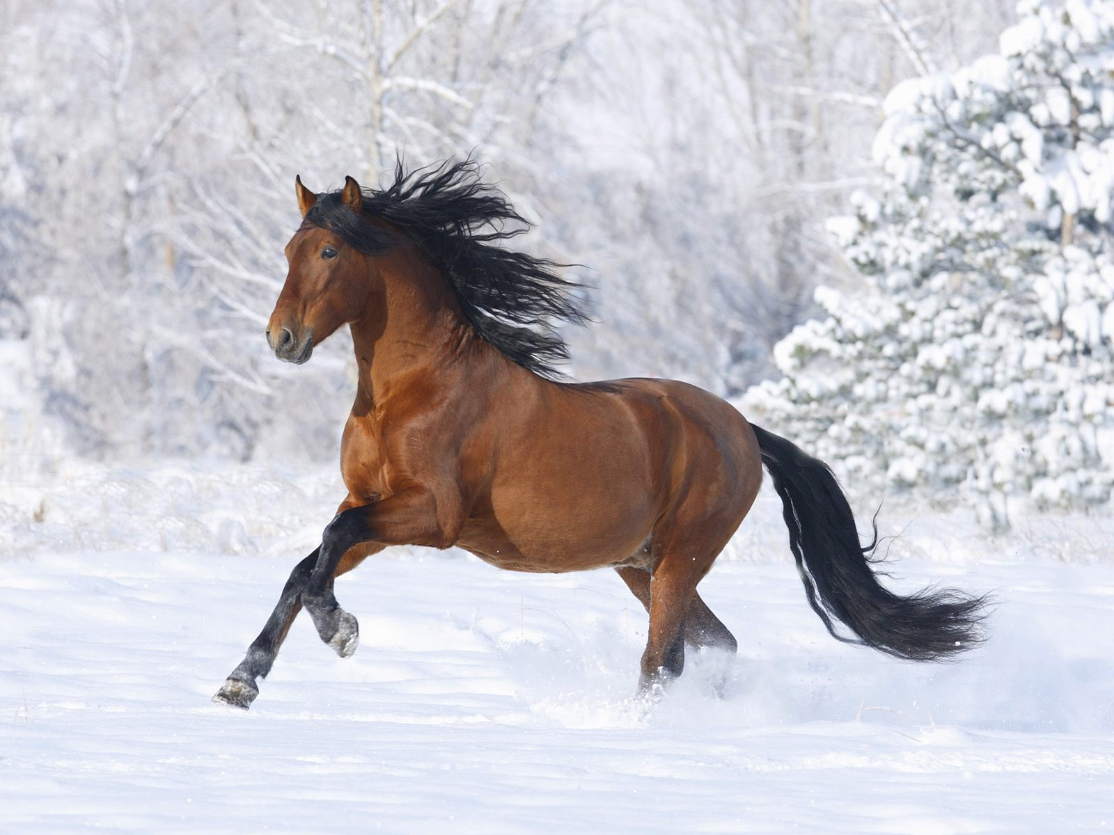 Beautiful Wallpaper Horse Stunning - horse-on-the-snow  Photograph_846227.jpg