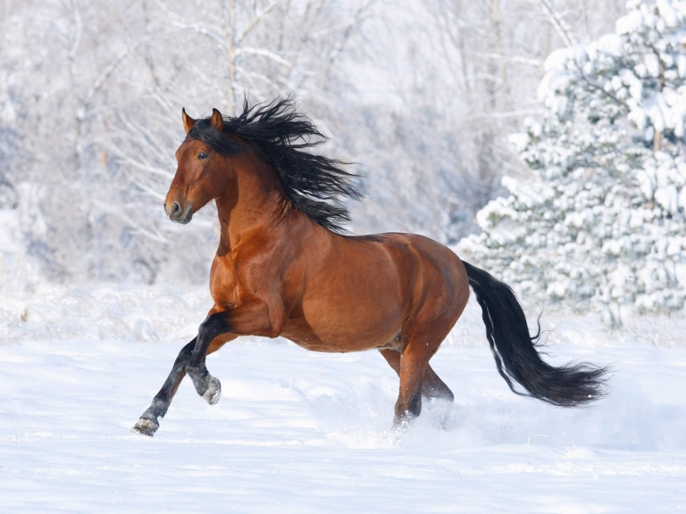 Horse-on-the-snow