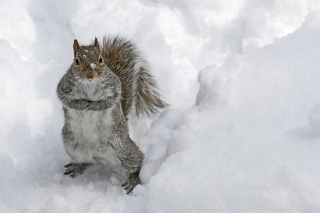 Trouble-Snow-Animals-18